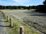 鯉やアヒルがたくさん泳いでいた池は液状化により泥が湧き上がり水は枯れた